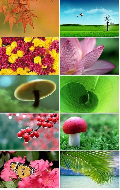 Cooles HD Nature Wallpaper Pack für Windows 7